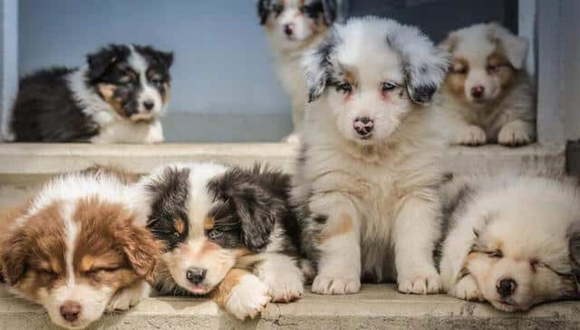 Astrologie: tout ce qu'il faut savoir sur le signe astro de son chien !