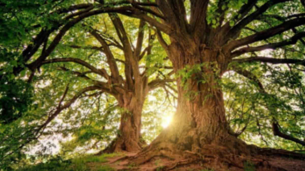 Etudiant: le 1er arbre du prochain campus de Lyon déjà planté !