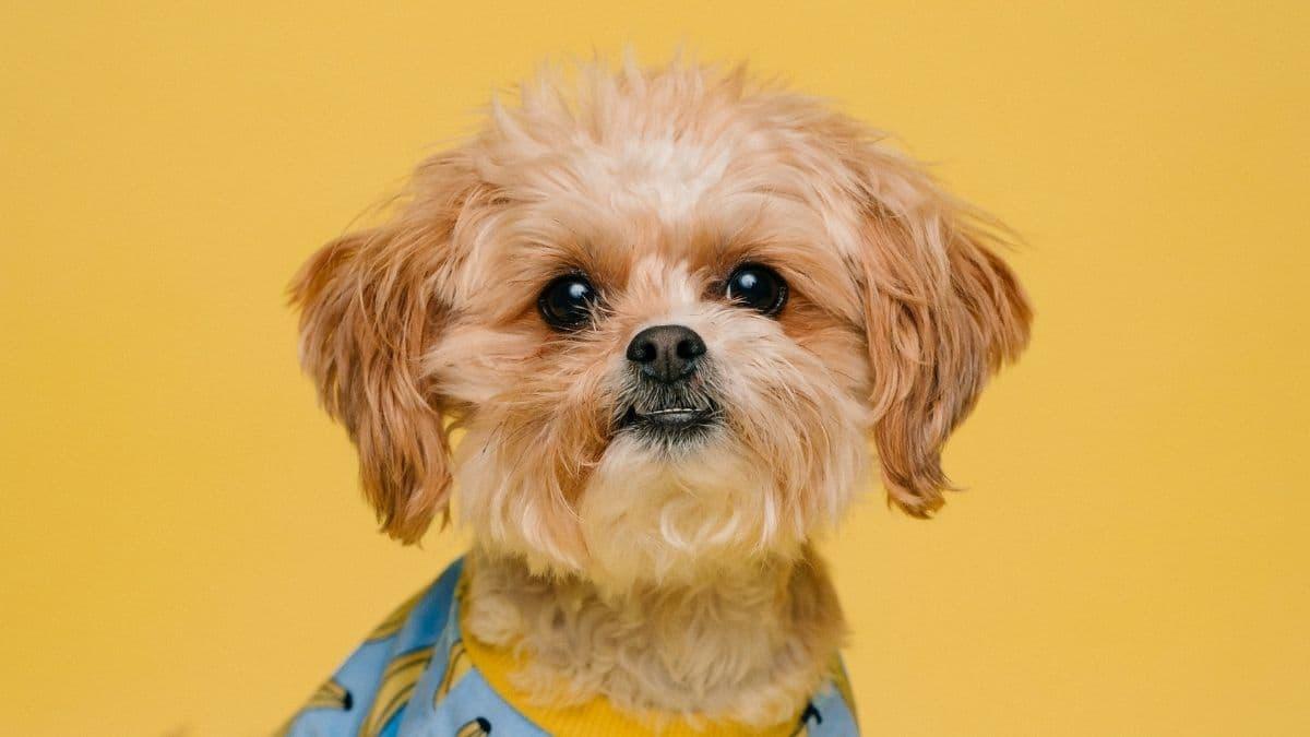 Instagram: comment rendre son chien célèbre sur la Toile ?