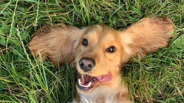 Instagram: comment rendre son chien super célèbre sur la Toile ?