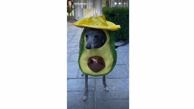 Kylie Jenner déguise son chien en avocat géant pour fêter Halloween !